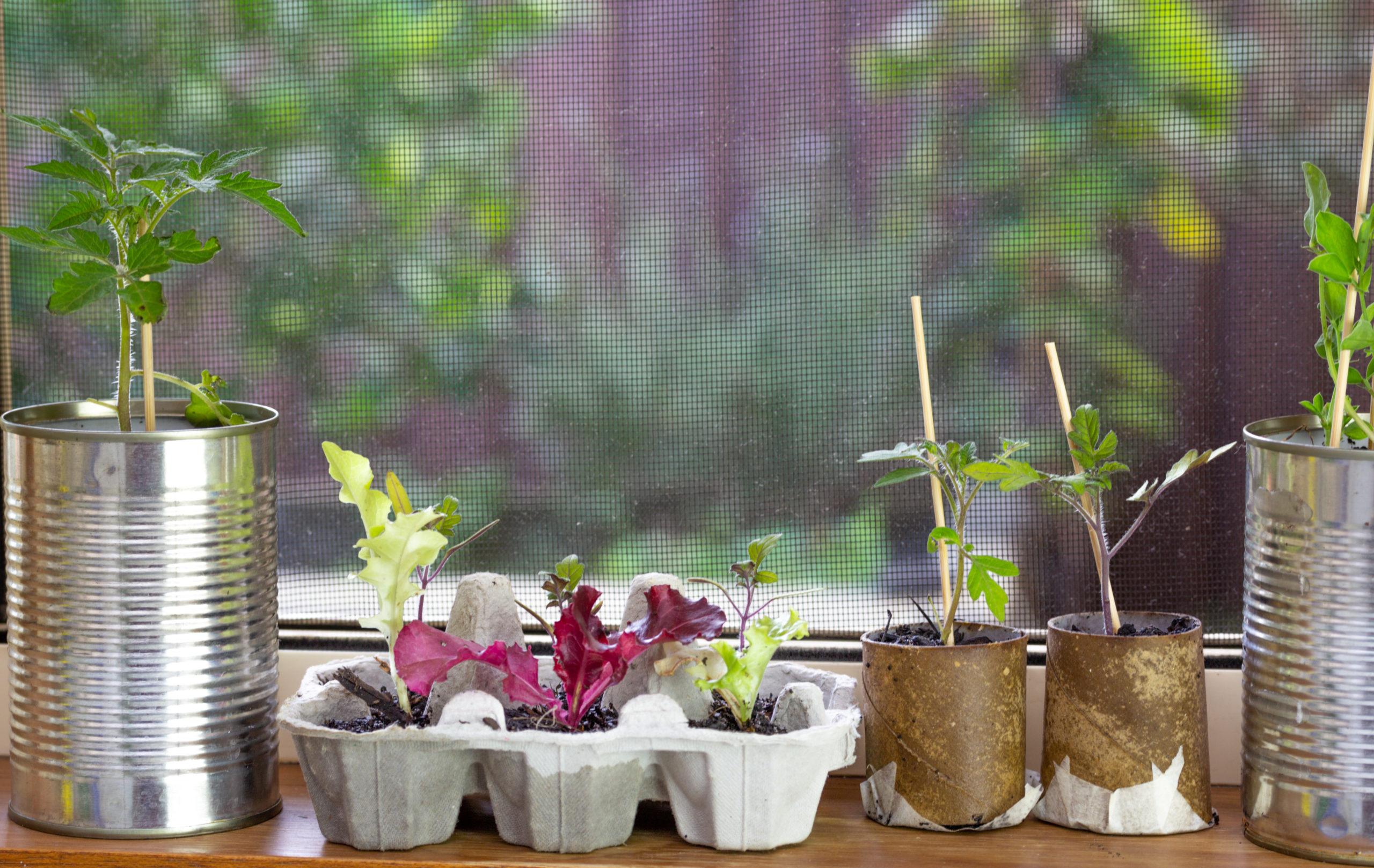 6 Recycling Tips to Start Your Summer Garden
